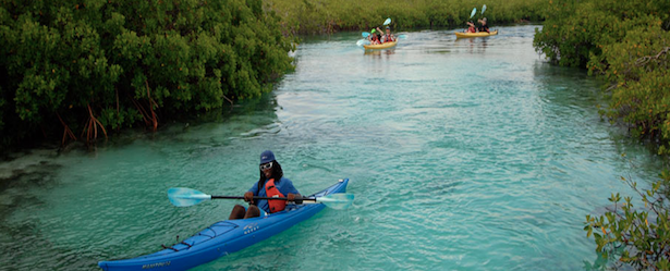 photo of kayakers in the mangroves of turks and caicos
