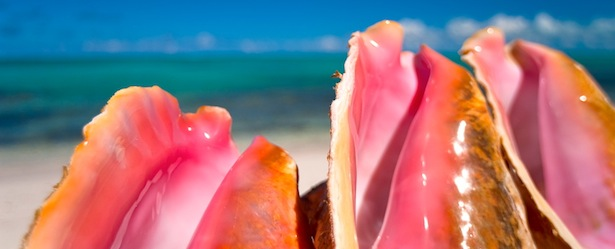 Things to Do in Turks and Caicos Conch Farm